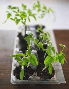 Így lesz idén háromszor annyi paradicsomod! Zseniális trükk! - Ripost Garden Design, Plants, Gardening, Lawn And Garden, Landscape Designs, Plant, Planets, Horticulture, Yard Design