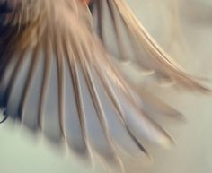 Wings by K.Young Photography