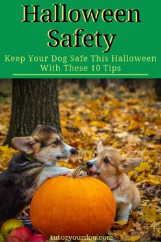 How To Keep Pets Safe During Halloween 2020 Pet Safety | 200+ ideas on Pinterest in 2020 | pets, pet safety