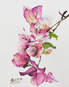 Bougainvillea by ThutDARA on DeviantArt Bougainvillea, Botanical Flowers, Botanical Prints, Watercolor Cards, Watercolour Painting, Watercolours, Watercolor Flowers Tutorial, Botanical Drawings, Gouache