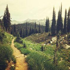 "banjosandbogs: "" Summer Trails from the West. """