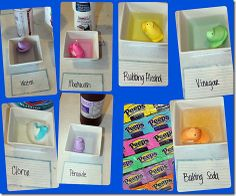 Science Projects using Peeps
