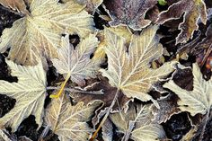Leaves - http://www.funsite.eu/2016/11/leafs/?utm_source=PN&utm_medium=Pinterest&utm_campaign=SNAP%2Bfrom%2BFunsite.eu