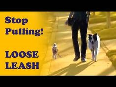 How to train your dog not to pull- Loose Leash Walking - YouTube