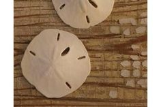 How to Harden Sand Dollars | eHow