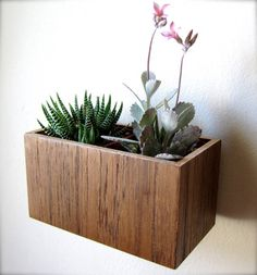 "Wall Hanging Planter (5""), Plant Holder for Succulents, Cacti or Air Plants in TEAK wood, roughly 5""x3""x3"", air plants sold separately on Etsy, $34.53 AUD"