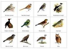 költöző madarak feladatlap - Google-keresés