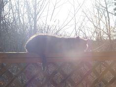 Cat sunning on the porch.