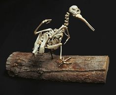 Christy Rupp Creates Creepy Skeletons of Extinct Birds With Fast Food Chicken Bones      Read more: Christy Rupp Creates Creepy Skeletons of Extinct Birds With Fast Food Chicken Bones | Inhabitat - Green Design Will Save the World
