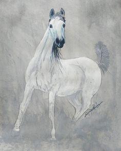 #arbian #arabianhorse #illustration #blackandwhite #watercolors #colors #color #horse #wild #artistic #artist #art #inkdrawing