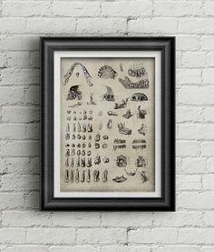 Anatomy teeth print 022 - medicine poster - antique print of tooth - teeth illustration - medicine poster deco - ancient anatomy