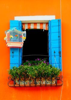 Windows, Bright, vibrant complimentary colours of orange and blue. Even the birds and mosaic planters match! Through The Window, Window Boxes, Happy Colors, Bright Colors, Rainbow Colors, Doorway, Windows And Doors, Blue Orange, Orange Sherbert