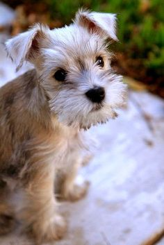 Top 10 Best Hypoallergenic Dog Breeds ~ The Pet's Planet. I would name this one Daavos.
