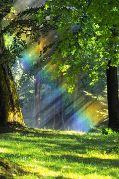 Rainbow in the forest....nice cool place to rest....maybe read a good book!