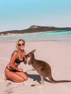 Grand National, National Parks, Funny Animal Videos, Funny Animals, Campervan Australia, Amazing Beasts, Australia Kangaroo, Australia Travel Guide, Travel Inspiration