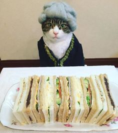 Cat Dresses Up To Have Dinner With His Mom, http://babepup.com/dining-dressed-cat-maro-japan/ Check more at http://babepup.com/dining-dressed-cat-maro-japan/