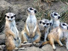Meerkat Manor on Animal Planet was great -- I loved Flower, and cried when babies died