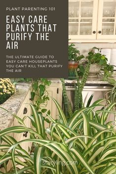 Be the plant parent you've always wanted to be! Follow the ULTIMATE guide to easy care plants that purify the air. You can't kill these plants if you tried! #houseplants #gardeningtips #houseplantcare #airpurifyingplants #plantcare #houseplantcaretips Easy Care Houseplants, Easy Care Plants, Container Gardening, Gardening Tips, House Plant Care, Let The Fun Begin, Diy Plant Stand, Low Maintenance Plants, Garden Images