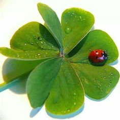 Discussion on LiveInternet - Russian Service Online Diaries Douglas Macarthur, Luck Symbol, Great Pictures, Superstar, Plant Leaves, Nostalgia, Plants, Facebook, Lady Bugs