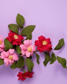 Favourite flower - Camellia #flowersmithbook