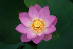 LOTUS by Ikuo Iga on 500px