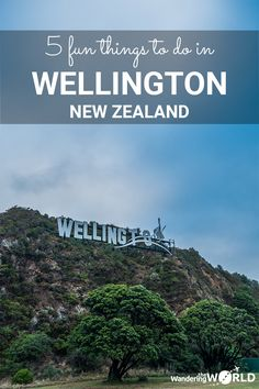 5 Fun Things to do in Wellington, New Zealand - Wandering the World