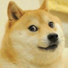 Shiba Inu, R4ve App, Cute Memes, Funny Memes, Hilarious, Funny Dogs, Cute Dogs, Doge Meme, Reaction Pictures