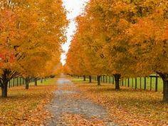 Autumn Drive, Lexington, Kentucky
