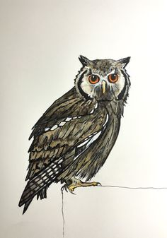 """Owl"" Original Ink Acrylic and Pencil Drawing by Allyson Kramer"