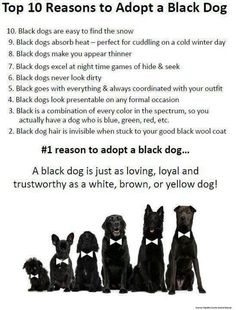 Personally, black dogs are my first choice. For some reason they are the most overlooked in shelters. Please consider adopting a black dog or a pit bull from your local animal shelter. :)