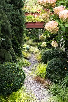 Gravel path leading to the mirror and roof garden amongst Carex oshimansis 'Everillo', Carex 'Ice Dance', Uncinia uncinata, Hydrangea paniculata 'Limelight' and topiary buxus balls