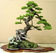 Rock-based Bonsai