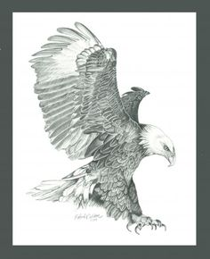 http://fineartamerica.com/featured/bald-eagle-in-a-dive-robert-wilson.html#comment4437373