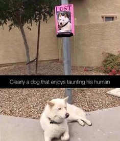 Funny pictures of dogs, funny animal memes, cute funny animals, funny pho. Funny Dog Captions, Funny Dog Memes, Funny Pictures With Captions, Funny Animal Memes, Cute Funny Animals, Funny Animal Pictures, Cute Baby Animals, Funny Cute, Best Funny Pictures