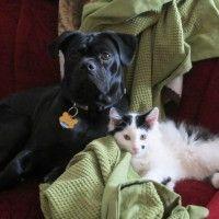 #dogalize Un cane che adotta un gatto: la storia di Opie e Roscoe #dogs #cats #pets