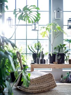Skapa en plats för meditation. Välj en mjuk matta på golvet som värmer fötterna, använd organiska material och fyll sedan på med favoritväxterna. Gungstol IKEA PS GULLHOLMEN, SINNERLIG matta slätvävd, sjögräs, NORNÄS bänk furu, SINNERLIG kruka blandade former svart.