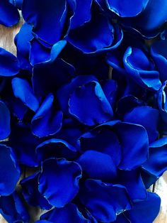 Royal Blue Wallpaper, Blue Roses Wallpaper, Blue Wallpapers, Blue Colour Wallpaper, Blue Aesthetic Dark, Aesthetic Colors, Photo Wall Collage, Picture Wall, Princesa Clash Royale