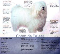 Coton de Tulear FCI Standard