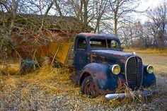 Retired Grain Truck - 1938 Ford