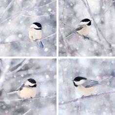 "Set of 4 Prints, Bird Wall Art Set """"Chickadees in Snow"""""