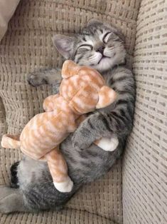 A kitty cuddled with his kitty cute puppies cats animals – Allison Connor Un chat câlin avec son chat chiots mignons chats animaux – Allison Connor – # câlin Cute Kittens, Kittens Playing, Feral Kittens, Cats Meowing, Siamese Kittens, Bengal Cats, I Love Cats, Crazy Cats, Cutest Animals