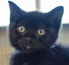 Sienna was adopted on 6/21/14 at our Adopt-a-Thon! #PHSAdoptaThon