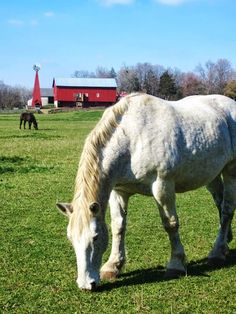 Dayton, Ohio- Carriage Hill Metropark- a great farm and park to visit in Dayton. I used to call this the horsey farm when I was little