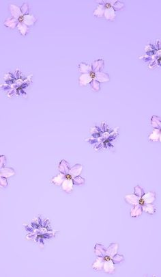 Pastell blumen There are also deluxe beers making kits that are available too. Light Purple Wallpaper, Purple Wallpaper Phone, Look Wallpaper, Cute Patterns Wallpaper, Iphone Background Wallpaper, Pastel Color Wallpaper, Dark Purple Aesthetic, Violet Aesthetic, Lavender Aesthetic