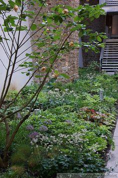 5 Culture Chanel Exhibit, The Garden // The Palais de Tokyo, Paris // Designer: Piet Oudolf // Images: 2013 Adam Woodruff + Associates Woodland Plants, Woodland Garden, Urban Landscape, Landscape Design, Paris Design, Shade Garden, Art Pictures, Garden Landscaping, Perennials