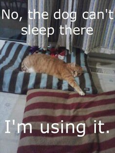 Both are mine. Nobody can sleep there #meme #funny #funnymemes #catsmeme