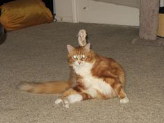 Mead in a compromising position. http://thewiseserpent.blogspot.com/2012/07/our-sweet-kitties.html