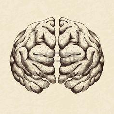 30187883-skizze-abbildung-des-menschlichen-gehirns.jpg (450×450)