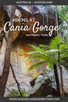 """Cania Gorge in Central Queensland is said to be a """"mini Carnarvon Gorge"""" offering sandstone rock formations, Aboriginal rock art, hiking trails, camping and more. We were somewhat underwhelmed but here are some hiking trails you could explore. 🌐 Queensland & Beyond #australia #hiking #queensland #camping"""