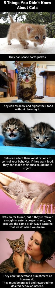 Cat Facts - Popular Pins On Pinterest